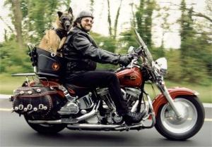 motorrijder met hond als duo